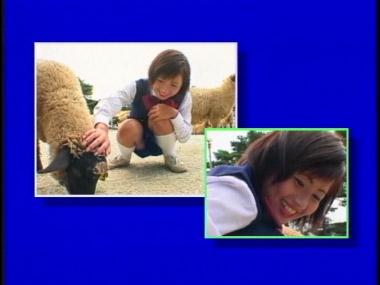 zukan_kyama_00022.jpg